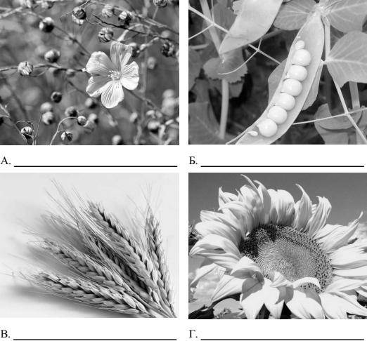 Ответ на 6 задание ВПР 2018 по биологии 5 класс из образца Фотографии растений