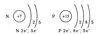строение атомов азота и фосфора