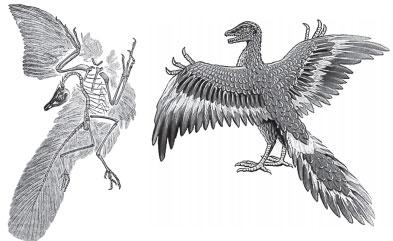 Скелет с отпечатком перьев
