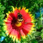 Цветочный нектар